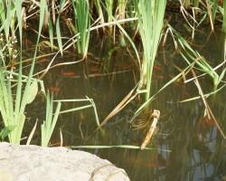 KVS-Wassergärten-DSC01390