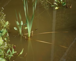 KVS-Wassergärten-DSC01394