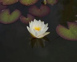 KVS-Wassergärten-DSC01411