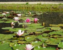 KVS-Wassergärten-DSC01414