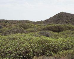 Kanarische Inseln DSC05637