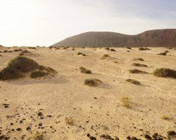 Kanarische Inseln DSC06344